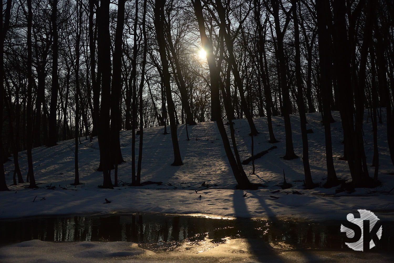 Vereister Bach | Lainzer Tiergarten | 2015